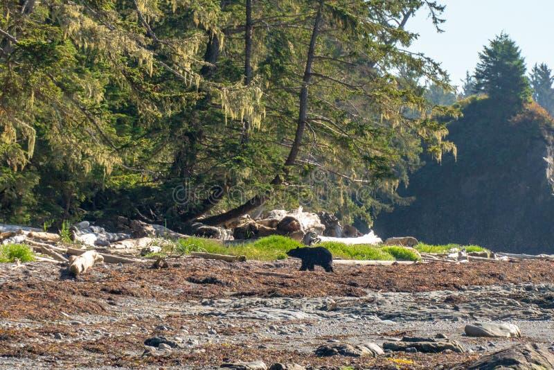 A lo largo de la costa costa rocosa de Washington fotos de archivo libres de regalías