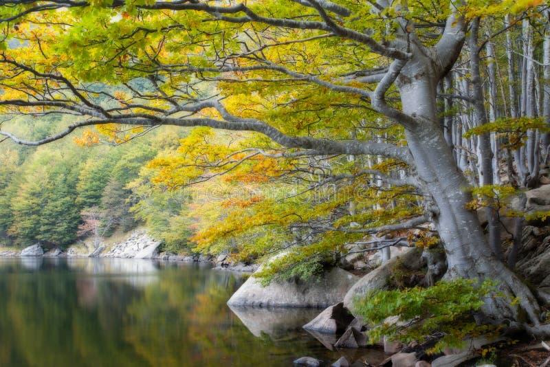 A lo largo del lago foto de archivo