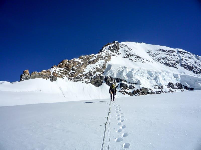 Lo scalatore di montagna attraversa un alto ghiacciaio alpino sul suo modo ad un picco di montagna nelle alpi svizzere fotografia stock