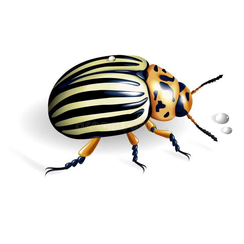 Lo scarabeo di patata del colorado royalty illustrazione gratis