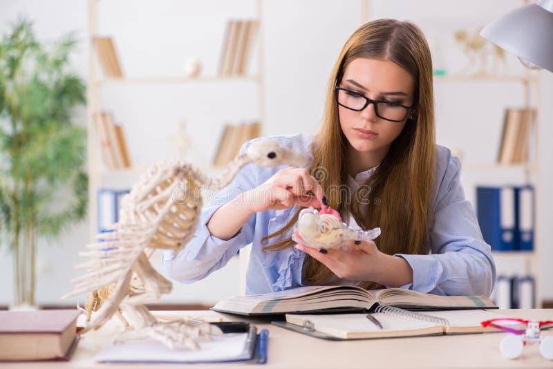 Download Lo Scheletro Animale D'esame Dello Studente In Aula Immagine Stock - Immagine di documento, exam: 117976705