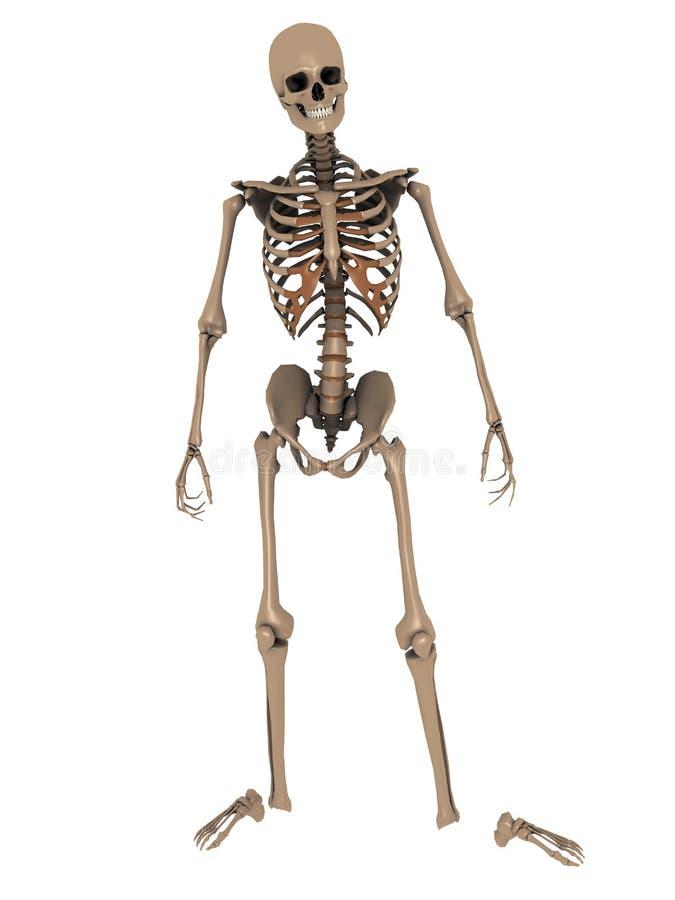 Lo scheletro 3D rende illustrazione di stock