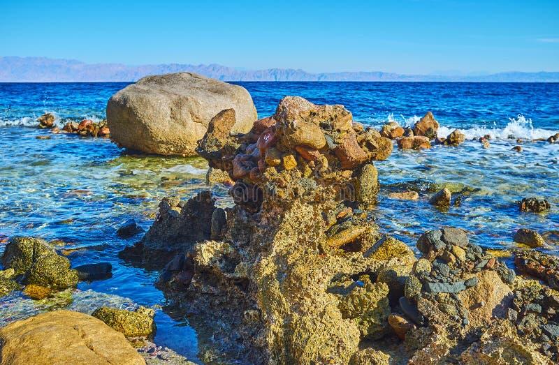 Lo scheletro di corallo sulla riva del golfo di Aqaba, Sinai, Egitto immagini stock libere da diritti