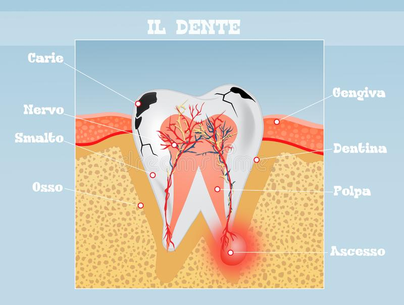 Lo schema del dente royalty illustrazione gratis