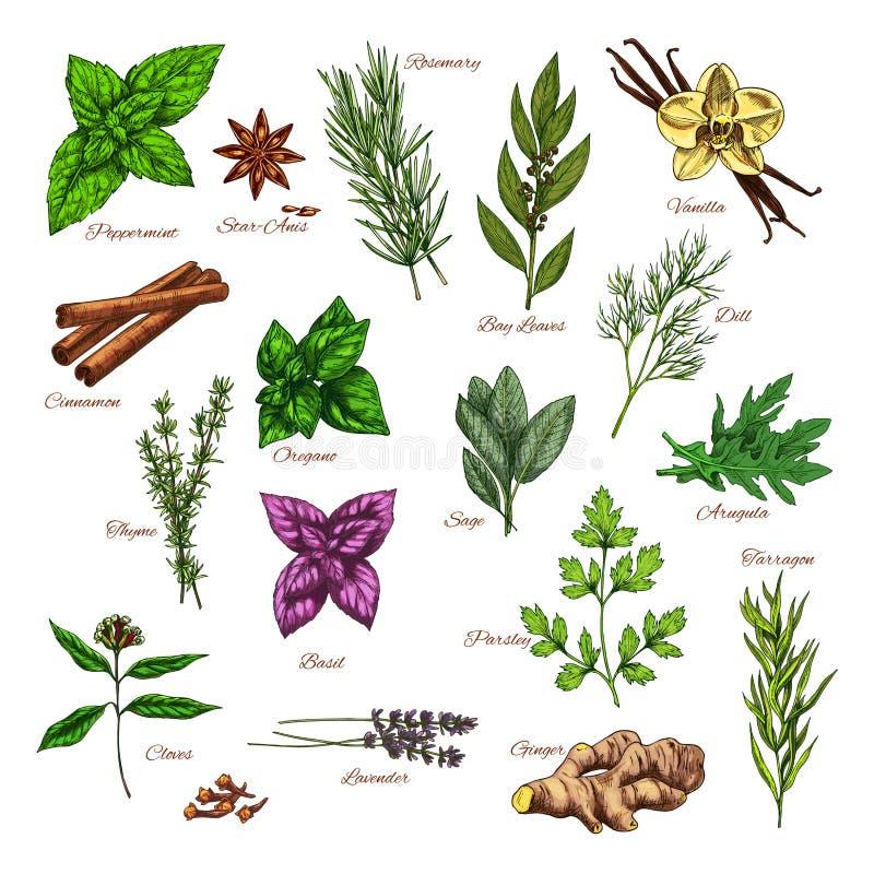 Lo schizzo culinario della spezia e dell'erba per alimento progetta illustrazione di stock