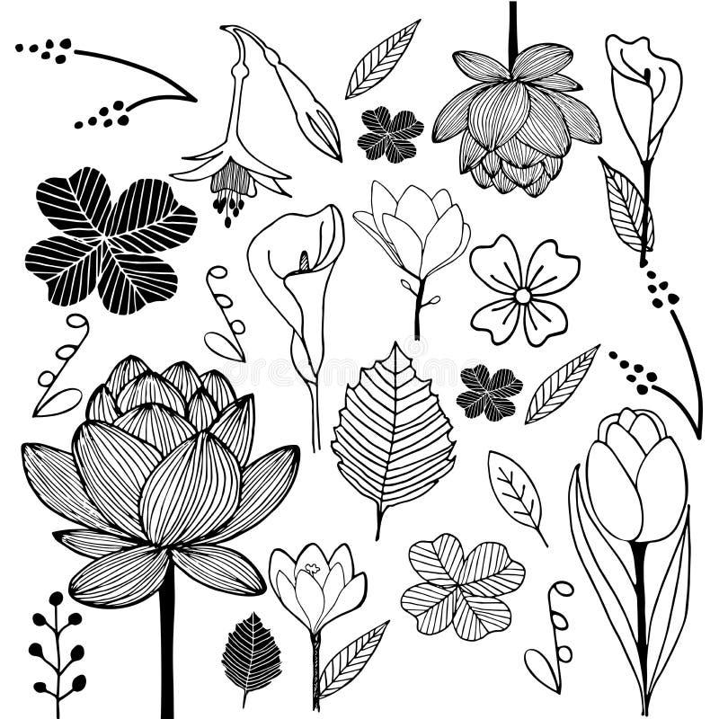 Lo schizzo disegnato a mano della foglia e del fiore scarabocchia in bianco e nero illustrazione vettoriale