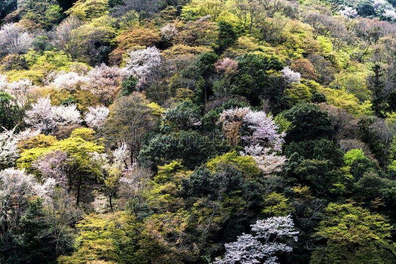Lo sfondo naturale con verde degli alberi fotografia stock