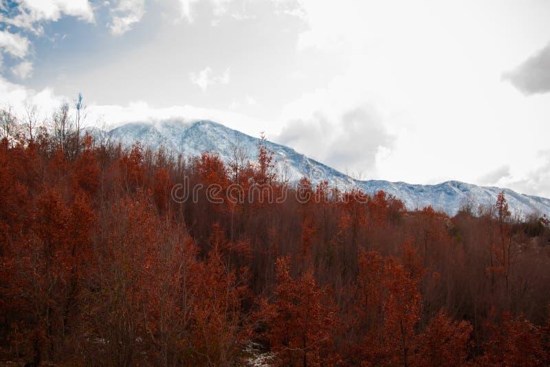 Lo sfondo naturale del cambiamento condisce - gli alberi rossi dorati nella foresta e le cime di bianco nevoso in montagne fotografia stock