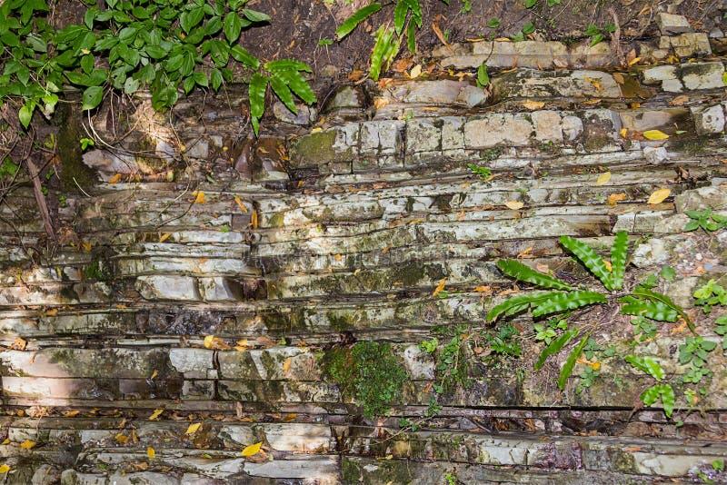 Lo sfondo naturale della roccia è composto di strati irregolari della pietra coperti di muschio e di piante immagini stock libere da diritti