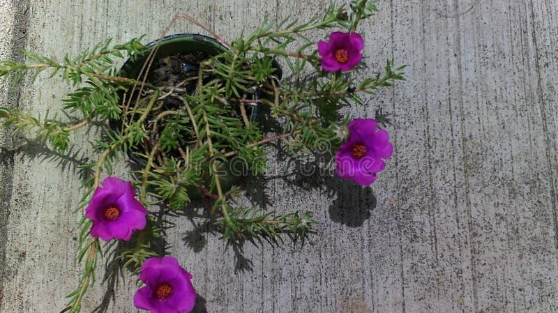 Lo sguardo dei fiori voi immagine stock