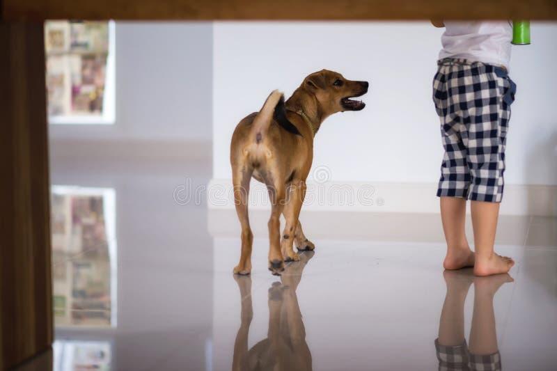 lo sguardo del cucciolo di cane ed elemosina lo spuntino immagini stock