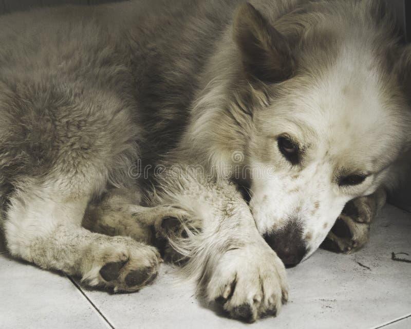 Lo sguardo sveglio del cane fotografia stock