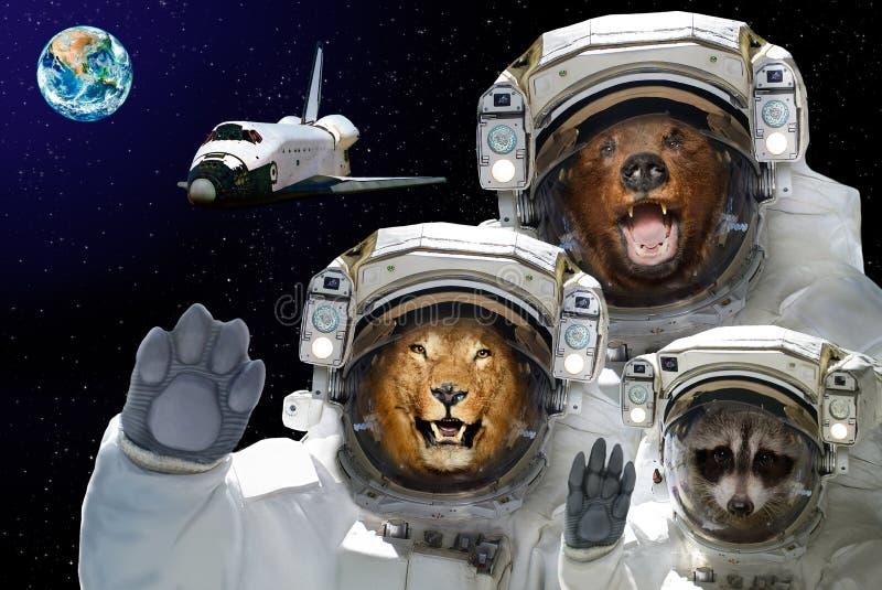 Lo spazio è disponibile a tutti Orso, procione e leone nello spazio contro lo sfondo della navetta spaziale e del pianeta Terra fotografie stock libere da diritti