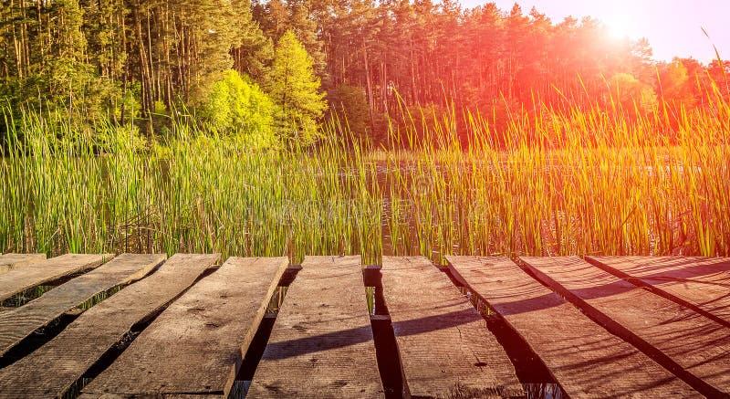 Lo spazio per installazione Vecchia tabella di legno Erba del paesaggio, in lago immagine stock