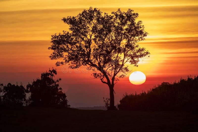 Lo spettro del tramonto e del fondo della siluetta sugli alberi fotografie stock