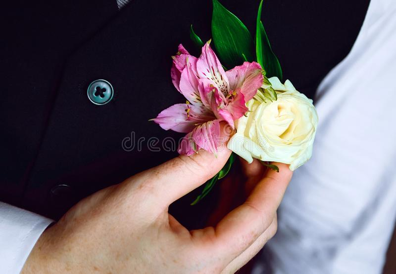 Lo sposo raddrizza l'occhiello, primo piano immagini stock libere da diritti