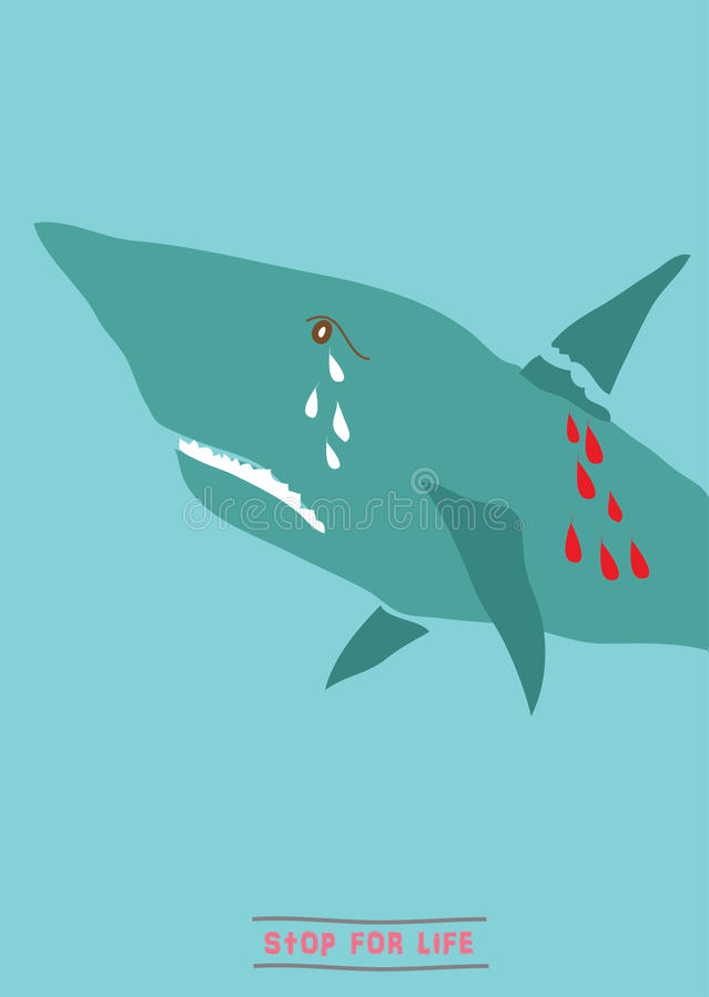 Conservi lo squalo illustrazione di stock