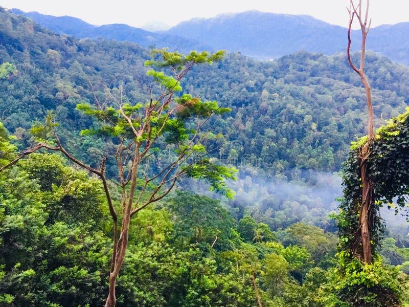 Lo Sri Lanka di amore immagini stock