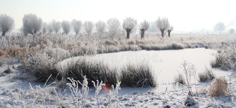 Lo stagno congelato e gli alberi bianchi in neve abbelliscono fotografia stock libera da diritti