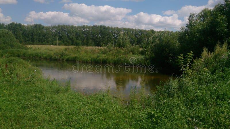 Lo stagno di estate fotografia stock