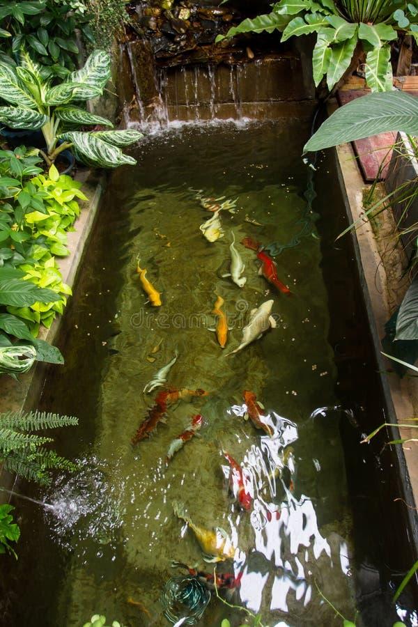 Lo stagno di pesce meravigliosamente è stato decorato nel cortile o nel deposito fotografia stock