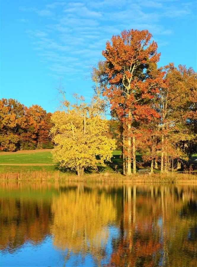 Lo stagno si trasforma in in uno specchio naturale nel giorno soleggiato dell'autunno fotografia stock libera da diritti