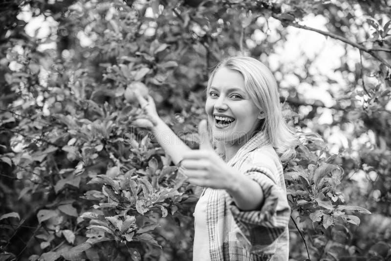 Lo stile rustico della ragazza riunisce il giorno di autunno del giardino del raccolto delle mele Agricoltore che seleziona frutt fotografie stock