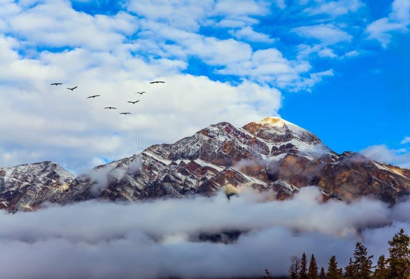 Lo stormo degli uccelli sorvola la foschia di mattina immagine stock