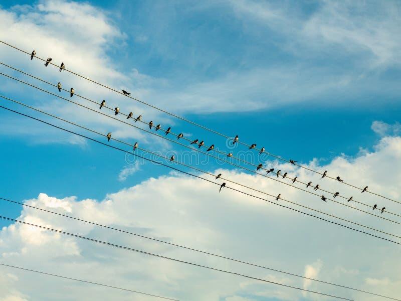 Lo stormo degli uccelli sta sedendo sui cavi elettrici contro lo sfondo del cielo nuvoloso Cielo blu coperto di grande bianco immagini stock libere da diritti