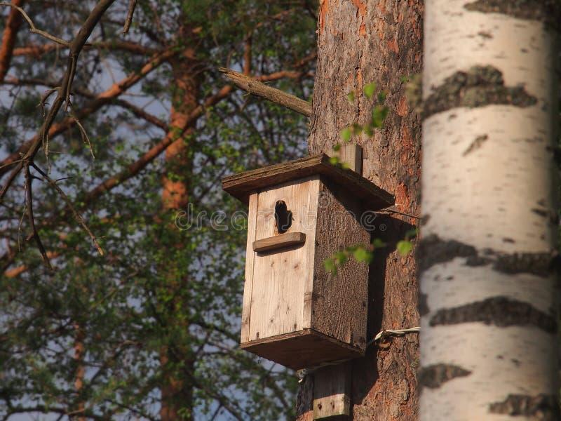 Lo storno guarda dall'aviario L'uccello sul nido fotografia stock libera da diritti