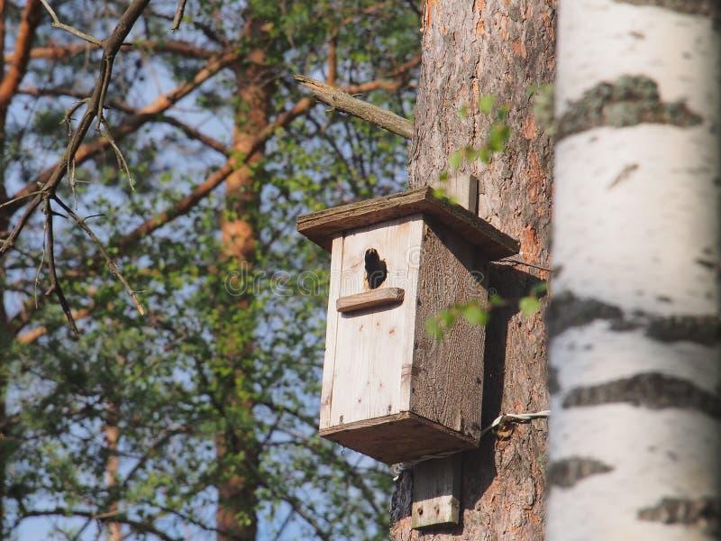 Lo storno guarda dall'aviario L'uccello sul nido immagini stock libere da diritti