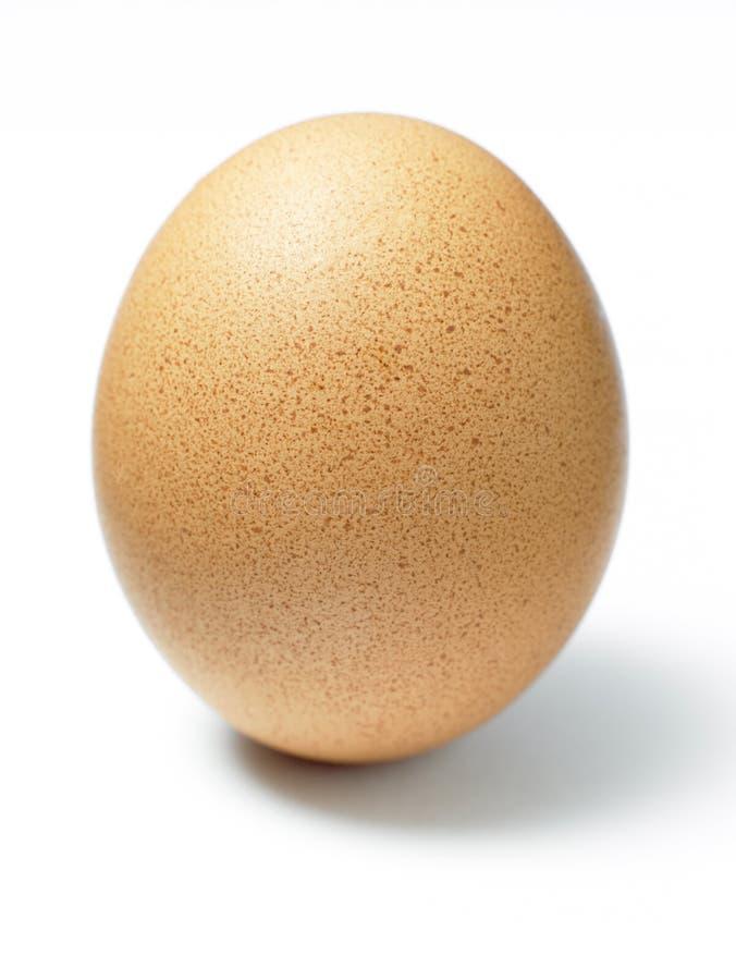 Lo studio ha sparato di un uovo immagine stock