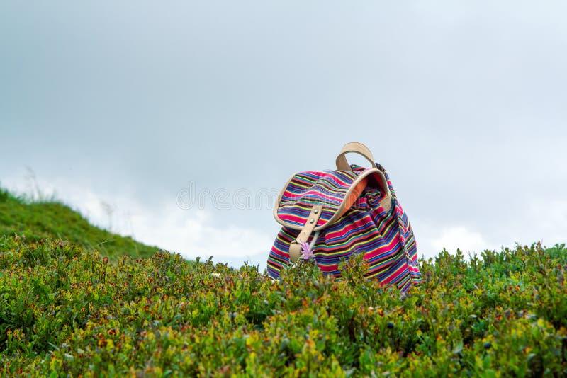 Lo zaino nei mirtilli dell'erba nelle montagne della Norvegia, concetto della ragazza intelligente di vacanza immagini stock libere da diritti