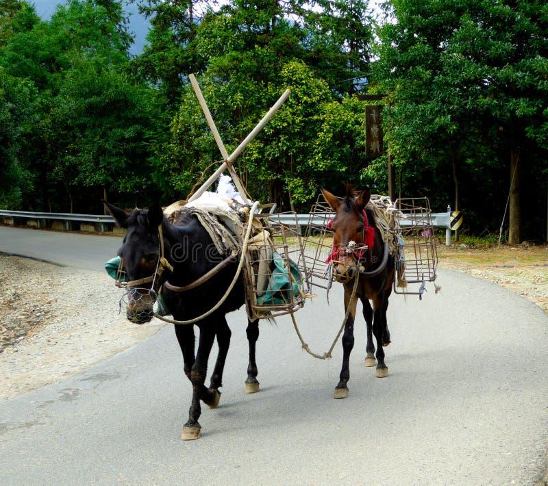 A load of donkeys stock image