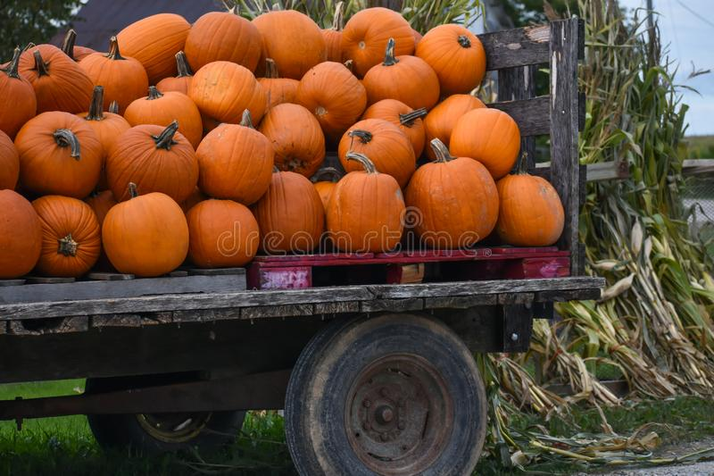 Load of Pumpkins on a Trailer with Corn Shucks stock photos