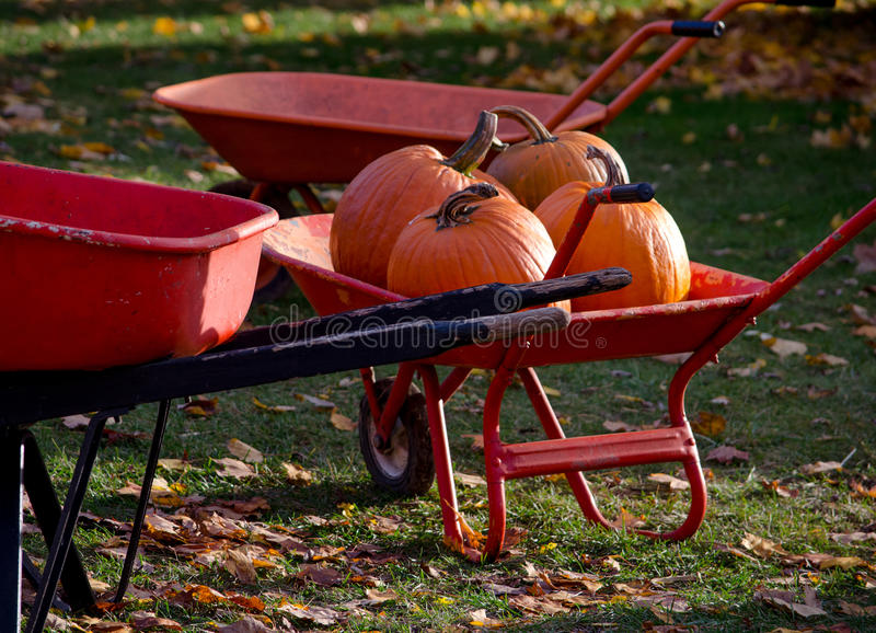 Wheel barrow filled with pumpkins stock photography