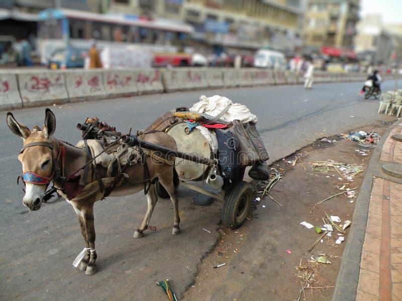 Loader Donkey royalty free stock photography