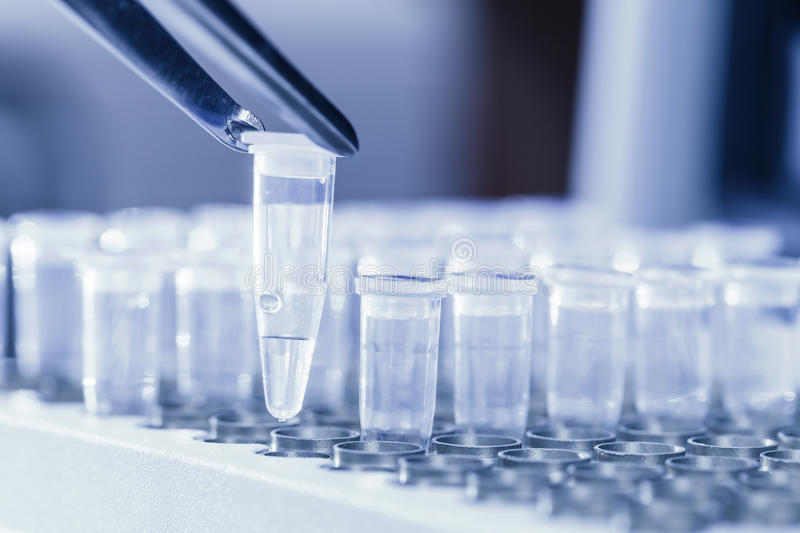 Loading DNA samples for PCR stock photography