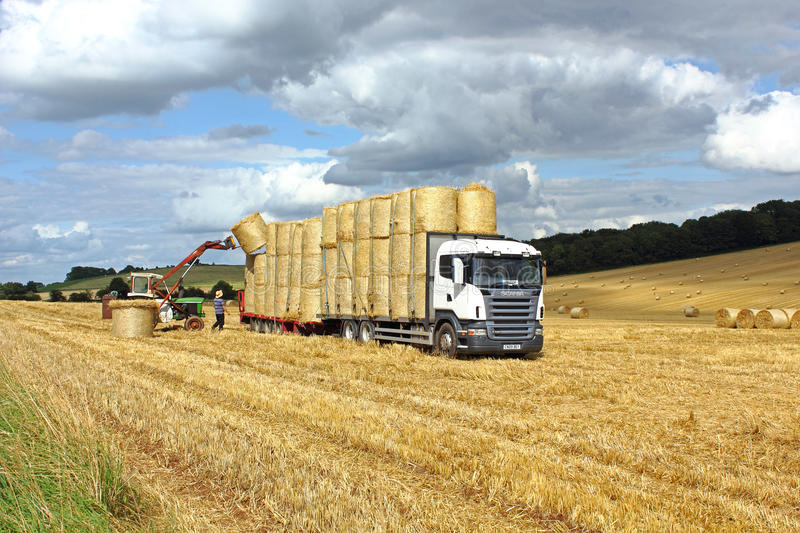 Loading hay bales on a truck. In the cornfield royalty free stock image