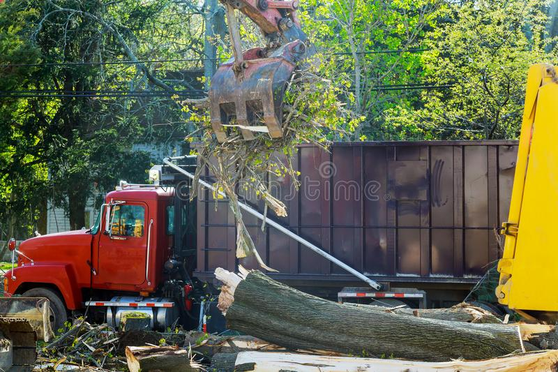 loading and exportation of cut trees after the storm stock photography