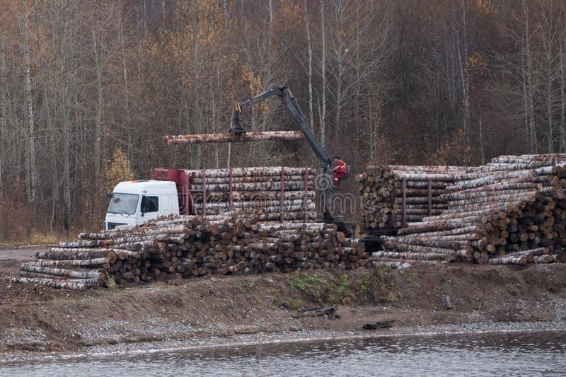 Loading of timber on railway carriages. Loader in work. stock image
