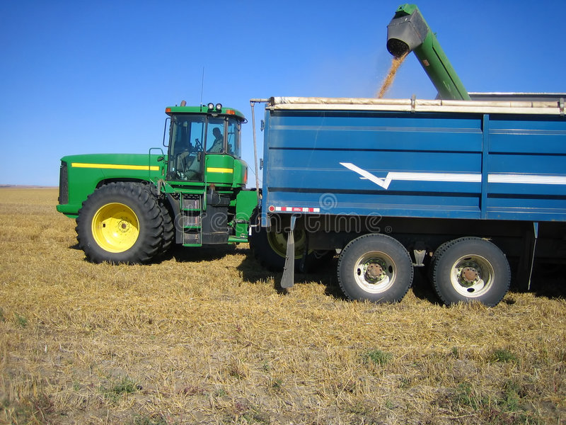 Loading trucks during harvest royalty free stock photography