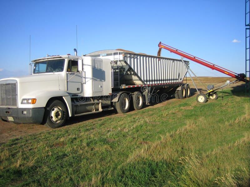 Loading wheat into trucks royalty free stock photos