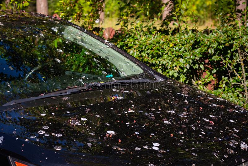 Loads of bird poop on top of the car. Dark hood of the car and front window with lot of bird droppings. Car covered with acid bird. Shit. Bad parking, bad luck royalty free stock photo