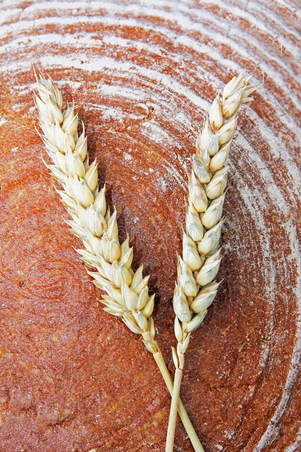 Loaf of bread and wheat ears. Loaf of bread and two ripe wheat ears royalty free stock image