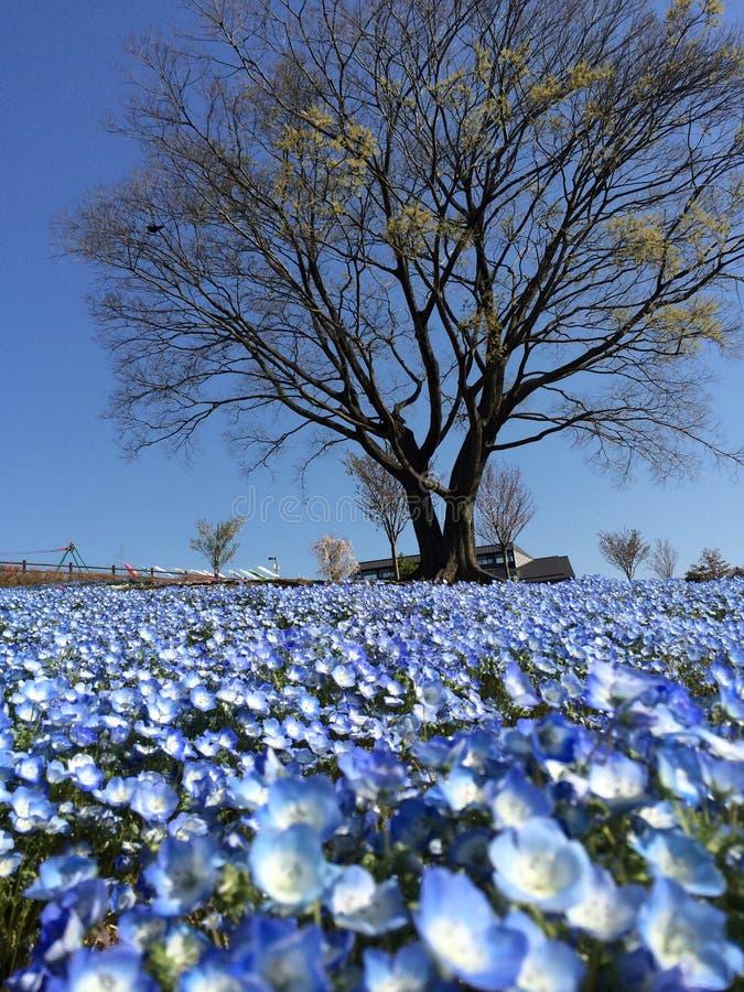Loan petals royalty free stock image