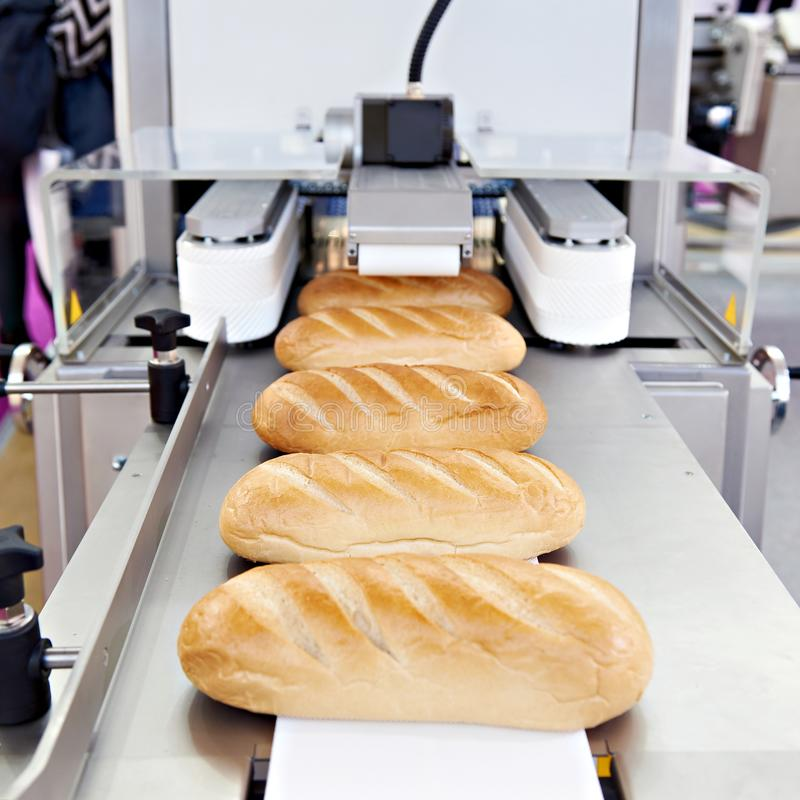 Loaves of bread on conveyor royalty free stock photo