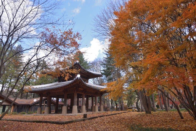 Lobed tempel för lönnlöv sju royaltyfri bild