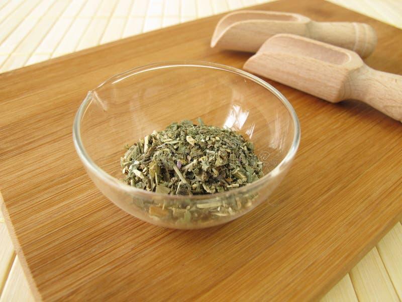 Lobelia, herba Lobelia стоковые изображения