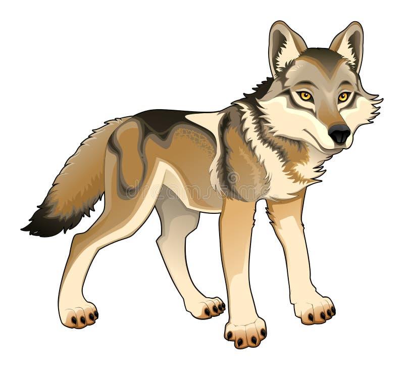 Lobo. Caráter isolado vetor ilustração stock